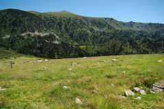 Mountain and meadow in Pyrenees stock images