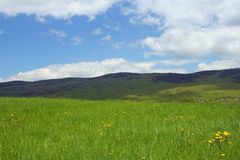 Mountain meadow scene, Croatia Royalty Free Stock Photography