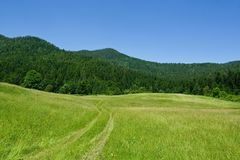 Mountain meadow scene during summer day Royalty Free Stock Photography