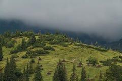 Mountain meadow. With storm clouds near Wildalpen, Hochschwab mountain range, Styria Stock Photos