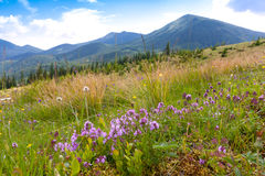 Mountain meadow in summer time Stock Photos