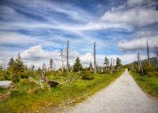 Mountain Meadow Trail royalty free stock photo