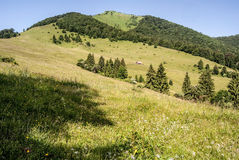 Mountain meadow with  tree and Osnica hill in Mala Fatra mountains in Slovakia Royalty Free Stock Photography