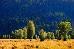 Mountain Meadow with Trees Stock Photography