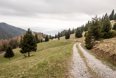 Mountain meadow with  trees and dirty road in Velka Fatra mountains in Slovakia Royalty Free Stock Image