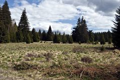 Mountain meadow with trees in Sumava mountains Royalty Free Stock Photos