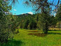 Mountain Meadow. Meadow at Wildcat Campground in the Ochoco Mountains near Prineville, OR royalty free stock photography
