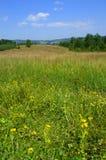 Mountain meadow Stock Image