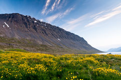Mountain and meadow of yellow flowers Royalty Free Stock Image