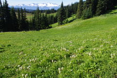 Mountain meadows Stock Photo