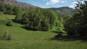 Mountain Meadows stock footage