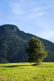 Mountain meadows and pastures in Slovakia Stock Image