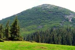 Mountain meadows Royalty Free Stock Image