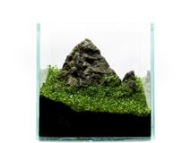 Mountain in miniature in aquarium, with plants. Aquarium with plant and rock on the white background. Mountain in miniature in aquarium, with plants Royalty Free Stock Images