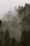 Mountain mist. Climbing up to Volcán San Martín, La Palma stock photography