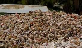 Mountain of molluscs. A mountain of conch shells piled on the beach beside an upturned dinghy Stock Image