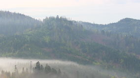 Mountain morning before sunrise. Fog moving stock footage