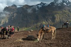 Mountain mules service. VINICUNCA, PERU- OCTOBER 29: mountain guides and their mules wait tourists at high altitude grounds in Vinicunca, Peru on October 29 royalty free stock images