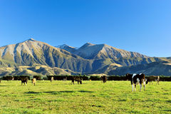 Mountain in new zealand. High mountain in new zealand stock photography