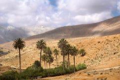 Mountain oasis. An oasis in the mountain of fuerte ventura Royalty Free Stock Photos
