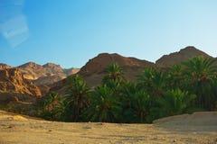 Mountain oasis Chebika Royalty Free Stock Photography