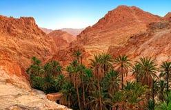 Mountain oasis Chebika royalty free stock images