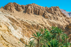 Mountain oasis Chebika at border of Sahara, Tunisia, Africa Stock Image
