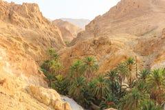 Mountain oasis Chebika Royalty Free Stock Photos