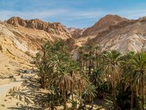 Mountain oasis Chebika in Sahara desert, Tunisia Stock Images