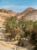Mountain oasis Chebika in Sahara desert, Tunisia Royalty Free Stock Images