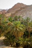 Mountain oasis Chebika in Tunisia Stock Photography