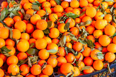 Mountain oranges Royalty Free Stock Photography
