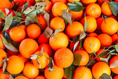Mountain oranges Royalty Free Stock Photo