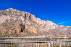 Mountain orchards. In Italy in winter Royalty Free Stock Photography