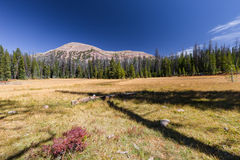 Mountain over fall meadow. This photo was taken in Naturalist Basin in Utah Royalty Free Stock Images