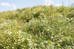 Mountain overgrown with wildflowers. Royalty Free Stock Photos