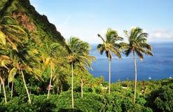 Mountain and Palm Trees Stock Photos