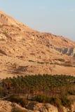 Mountain palms sky. Ein Gedi mountain blue sky royalty free stock photos
