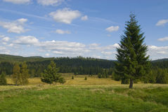 Mountain panorama with big spruce Royalty Free Stock Photo