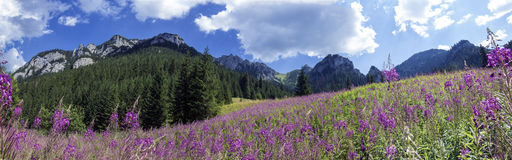 Mountain panorama from the valley.  Royalty Free Stock Images