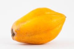 Mountain papaya Vasconcellea pubescens Royalty Free Stock Photo