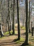 Mountain Park in autumn Stock Image