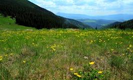 Mountain pasturage Stock Image