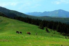 Mountain pasturage Stock Photos