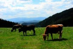 Mountain pasturage Royalty Free Stock Images