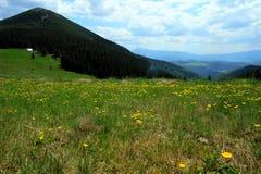 Mountain pasturage Stock Images
