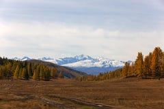 Mountain pasture Royalty Free Stock Image