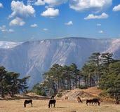 Mountain pasture Stock Photos