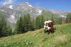 Mountain pasture Royalty Free Stock Photos