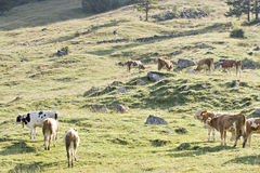 Mountain pasture Stock Images